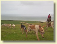 The Isle of Wight Foxhounds